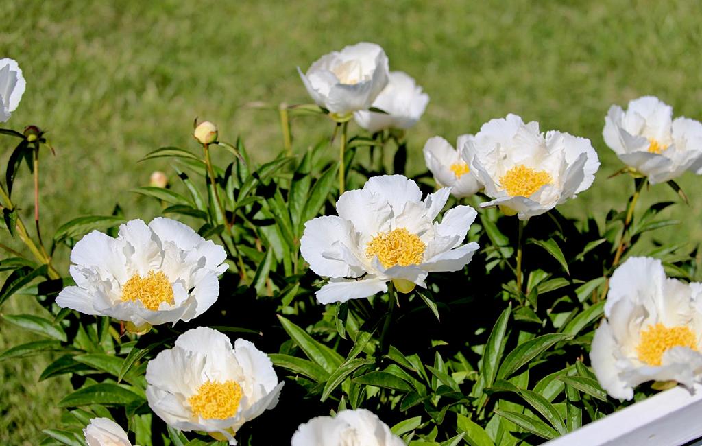Японский сад сиэтл фото смысл